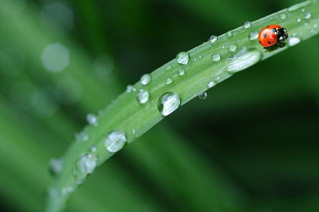 Photo of Vremenska prognoza: Pred nama je kišni tjedan!