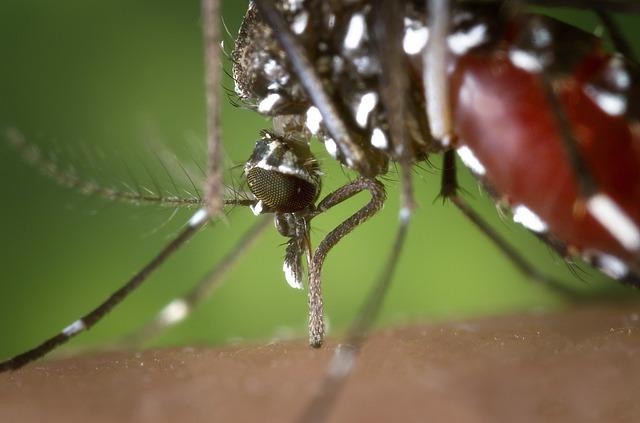 Photo of Mirisi ovih biljaka tjeraju komarce