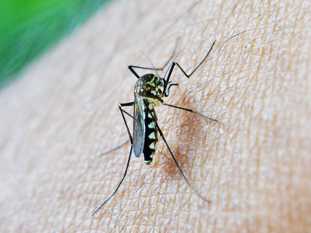 Photo of Zika virus stiže u Europu, Hrvatska na listi najugroženijih zemalja