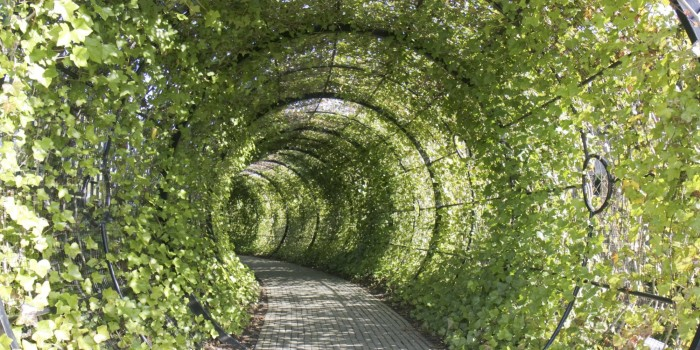 """Photo of Divan vrt u kojem vas sve """"želi ubiti"""""""