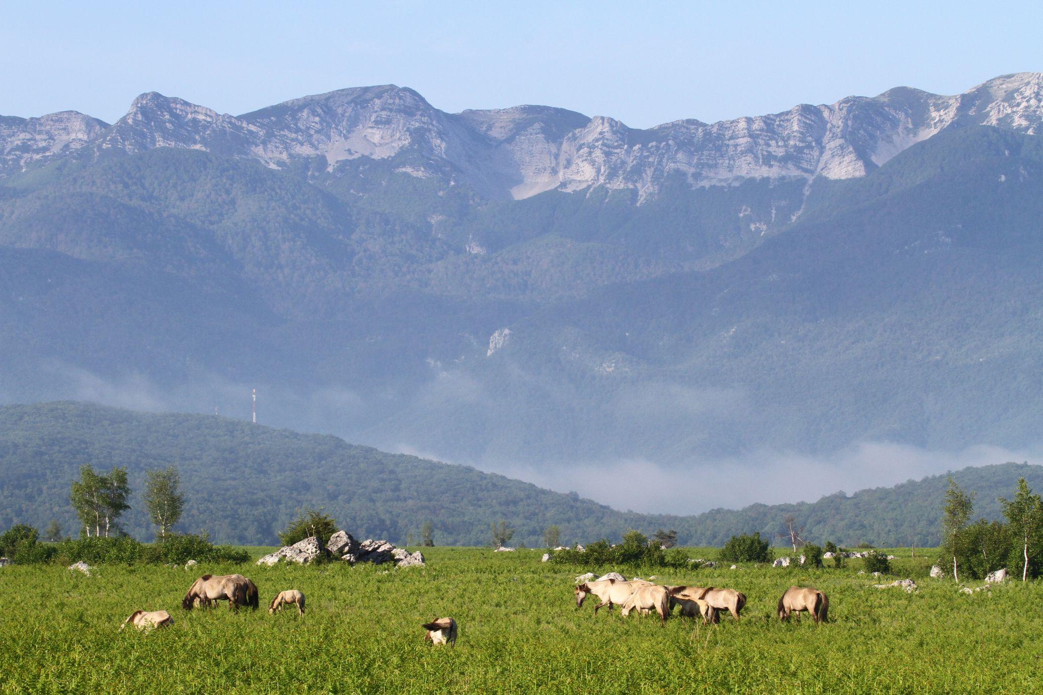 Prirodna ispaša Konik konji, Ličko polje, Hrvatska
