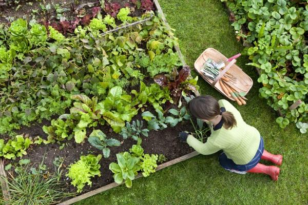Photo of Vrtlarenje može imati odličan učinak na vaše zdravlje