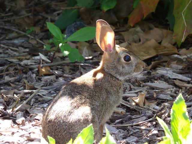 Photo of Ne dirajte mladunčad divljih zečeva  prirodi!