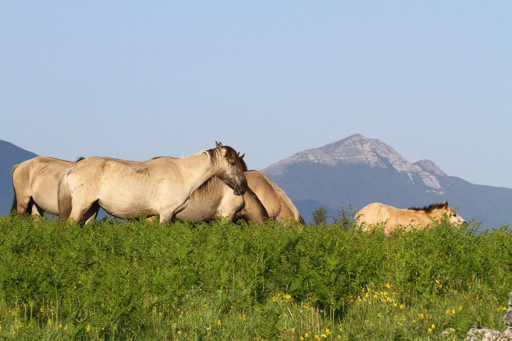 Photo of FOTO Rewilding Europe proslavila 5 godina, na Velebitu od samih početaka