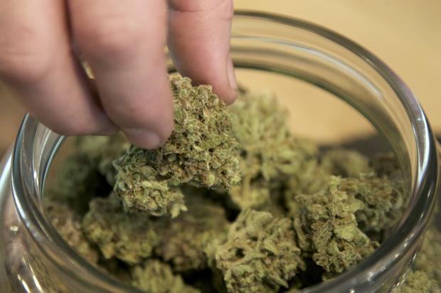 """Photo of KNJIGA M. BAKESA: """"Marihuana kao lijek – činjenice i mitovi"""""""