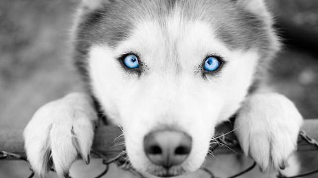 Photo of 10 najljepših pasmina pasa na svijetu