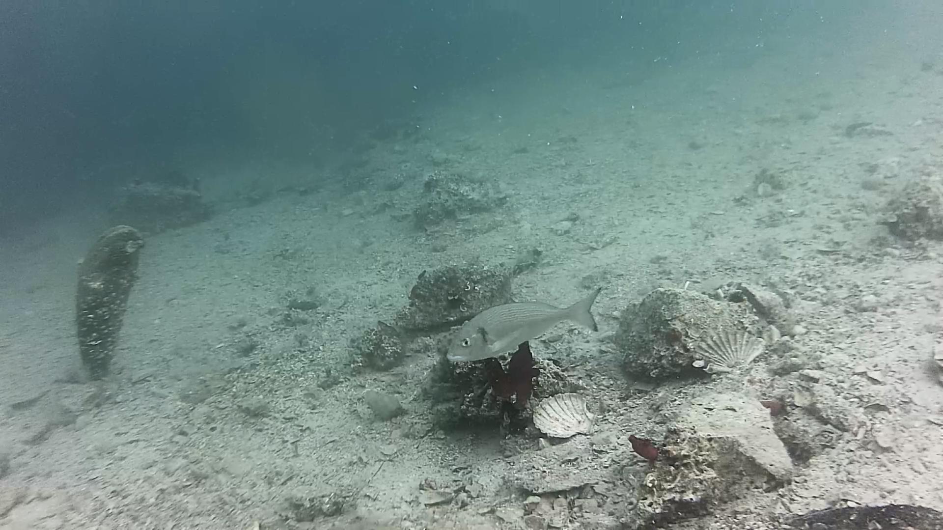 Photo of Podvodna kamera kod Šibenika: Pratite svijet podmorja uživo!