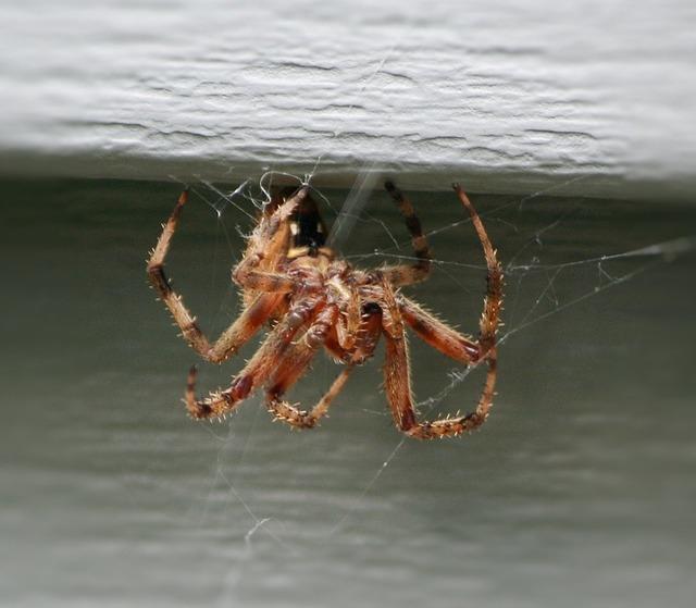 Photo of Što se dogodi s paukom kad ga izbacimo iz svog doma?