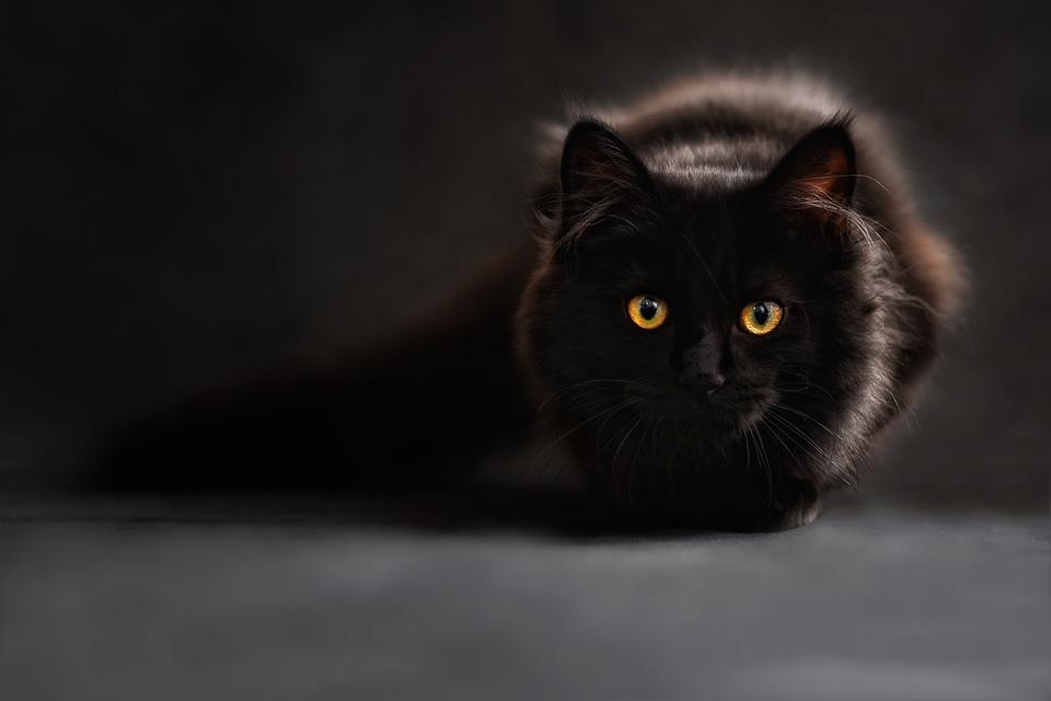 Photo of Naučite mačji jezik! 9 položaja repa repa koji otkrivaju što vam maca želi reći