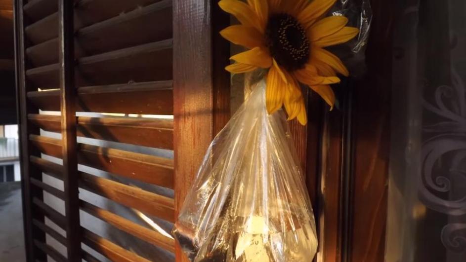 Photo of Neobičan trik protiv muha u vašem domu
