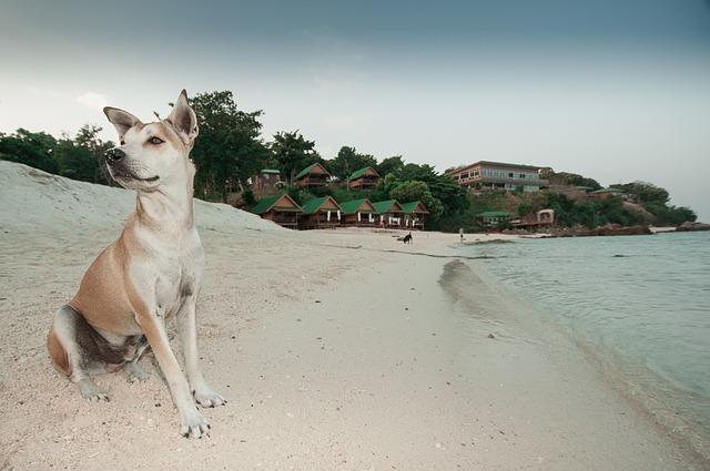 Photo of Plaže na koje su dobrodošli i kućni ljubimci