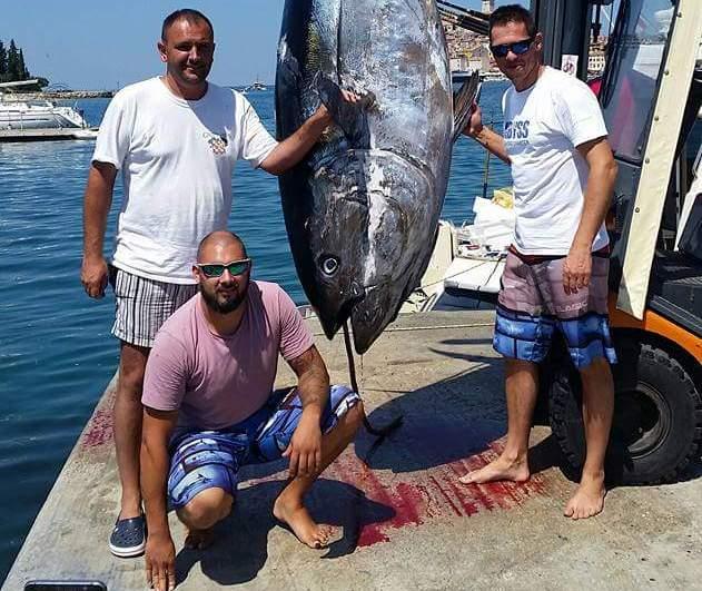 Photo of U Hrvatskoj ulovljena najveća tuna ikada