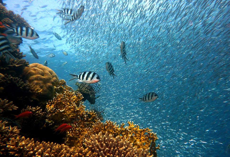 Photo of Invazija otrovnih egzotičnih riba na Jadranu
