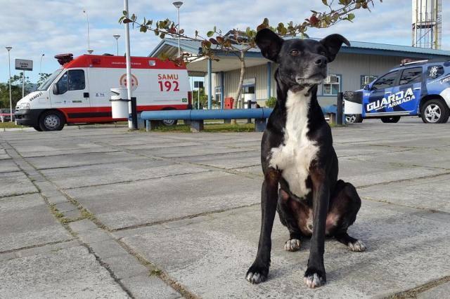 Photo of Bazilski Hachiko: Vlasnik je umro, ali ga njegov pas još čeka
