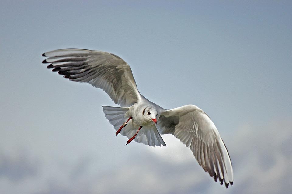 Photo of Znanstvenici dokazali da ptice spavaju u letu