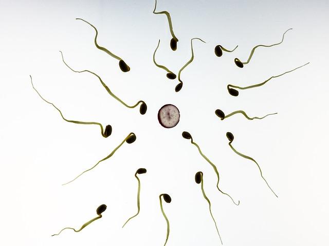 Photo of Istraživanje pokazalo: Dva muškarca mogu imati biološko dijete!