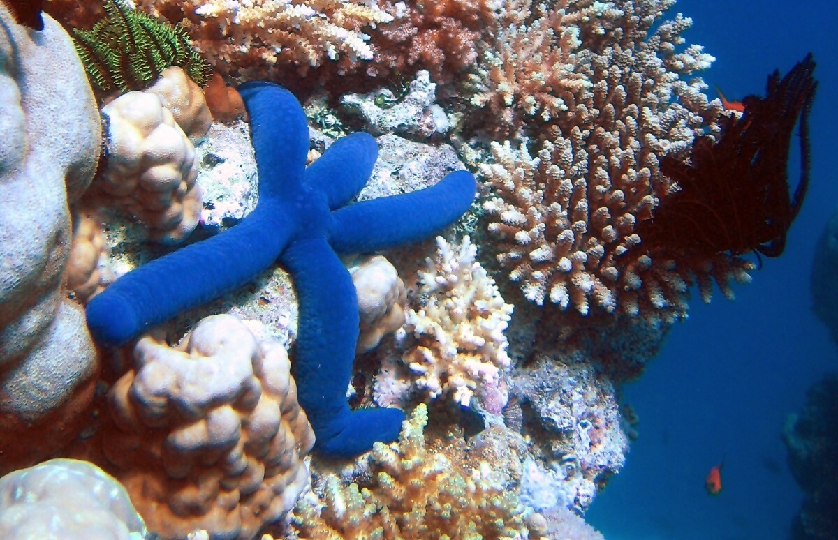 Photo of Veliki koraljni greben je mrtav