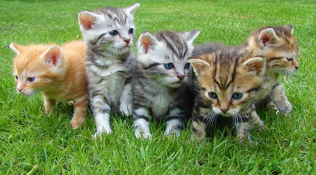 Photo of Ovih pet pasmina mačaka idealne su za obitelji s djecom