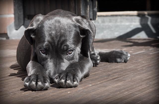 Photo of Znakovi koji će vam otkriti da se vaš pas boji