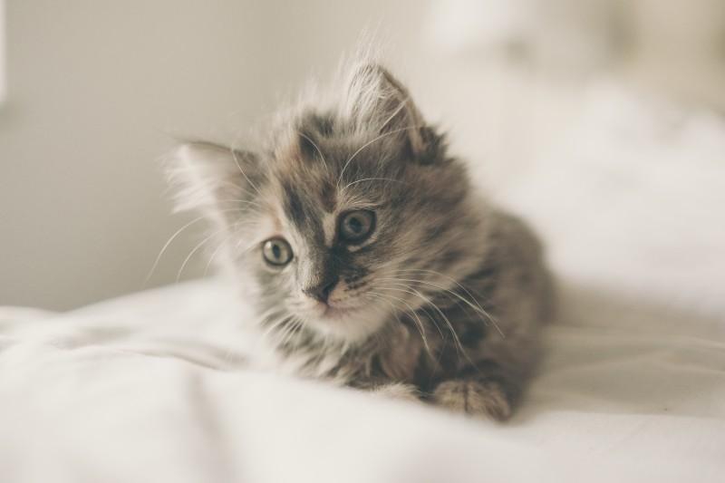 Photo of Pet načina kako mačke djeluju na kvalitetu vašeg života