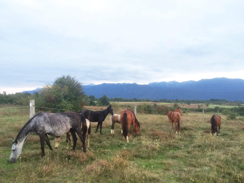 Photo of FOTO Priča iz Ličkog Ribnika: Grgurić ponosan na ergelu ličkih konja podno Velebita