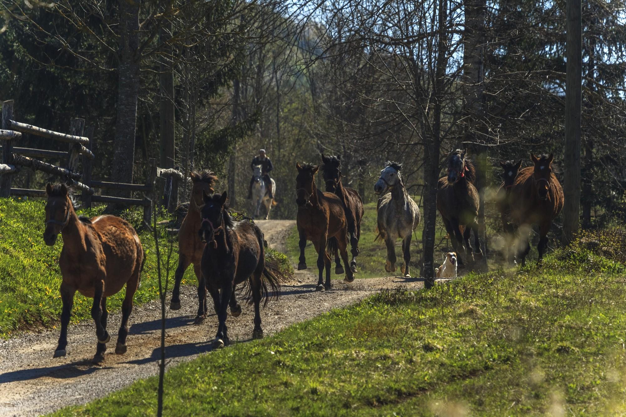 Photo of Konji kao novi potencijal Plitvičkih dolina sve zanimljiviji gostima