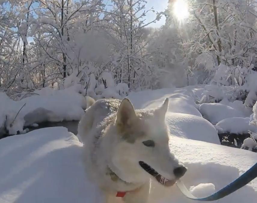 Photo of VIDEO: Zimska šetnja Plitvičkim jezerima