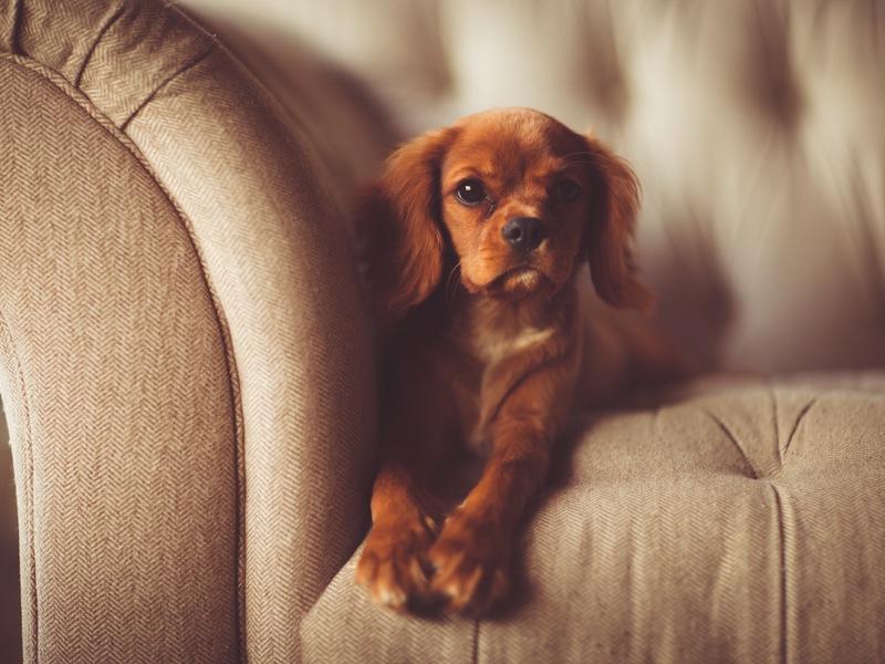 Photo of Što psi vide kad gledaju televiziju?