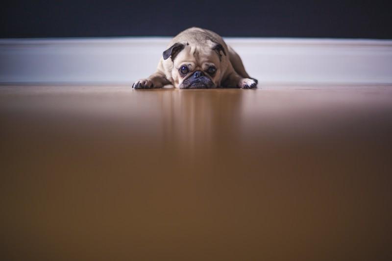 Photo of Stvari koje nijedan vlasnik psa ne smije raditi