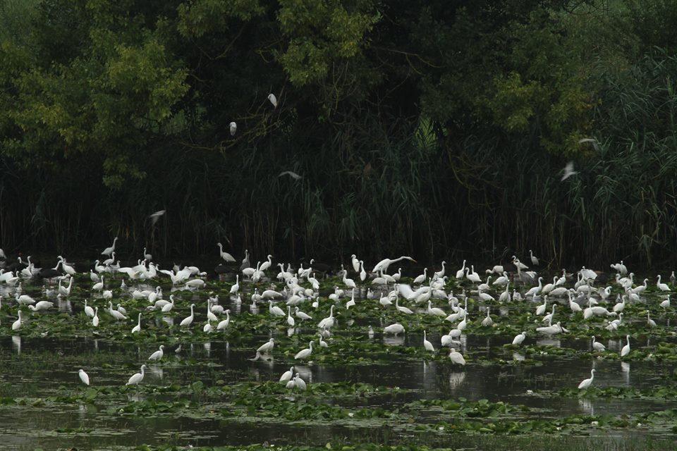 Photo of Kopački rit je najočuvanije vlažno stanište u Europi