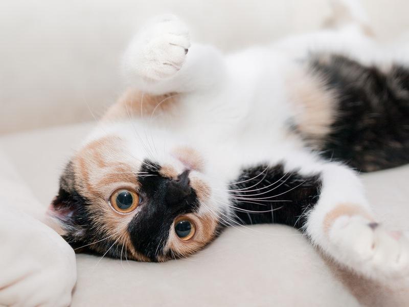 Photo of Znate li kako mačke utječu na zdravlje svojih vlasnika?