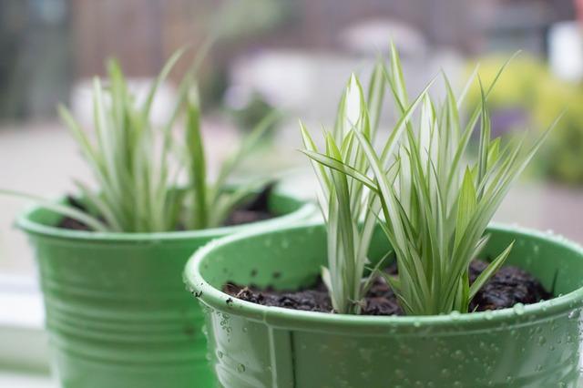 Photo of Jednokratna dječja pelena može odigrati važnu ulogu u životu kućnog bilja
