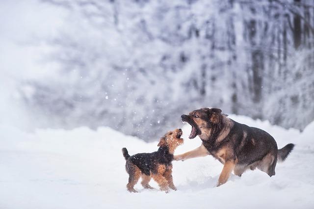 Photo of Zašto se psi tuku?