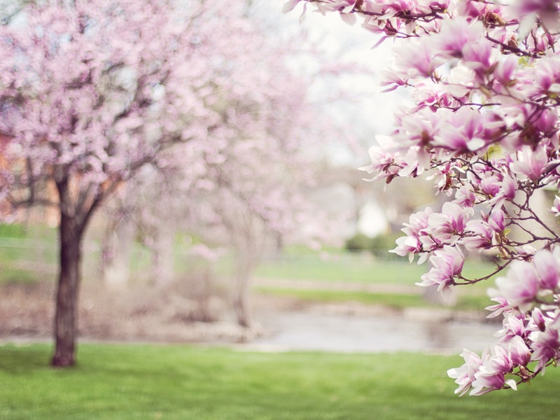 Photo of Stiglo nam je proljeće!