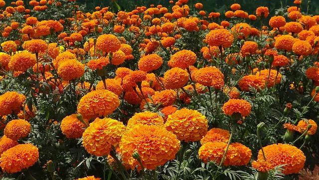 """Photo of """"Egzotični cvijetnjaci i bašće uskoro u Lici"""""""