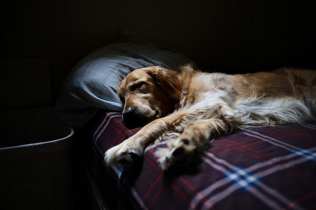 Photo of Zašto (ne) dijeliti krevet s kućnim ljubimcem