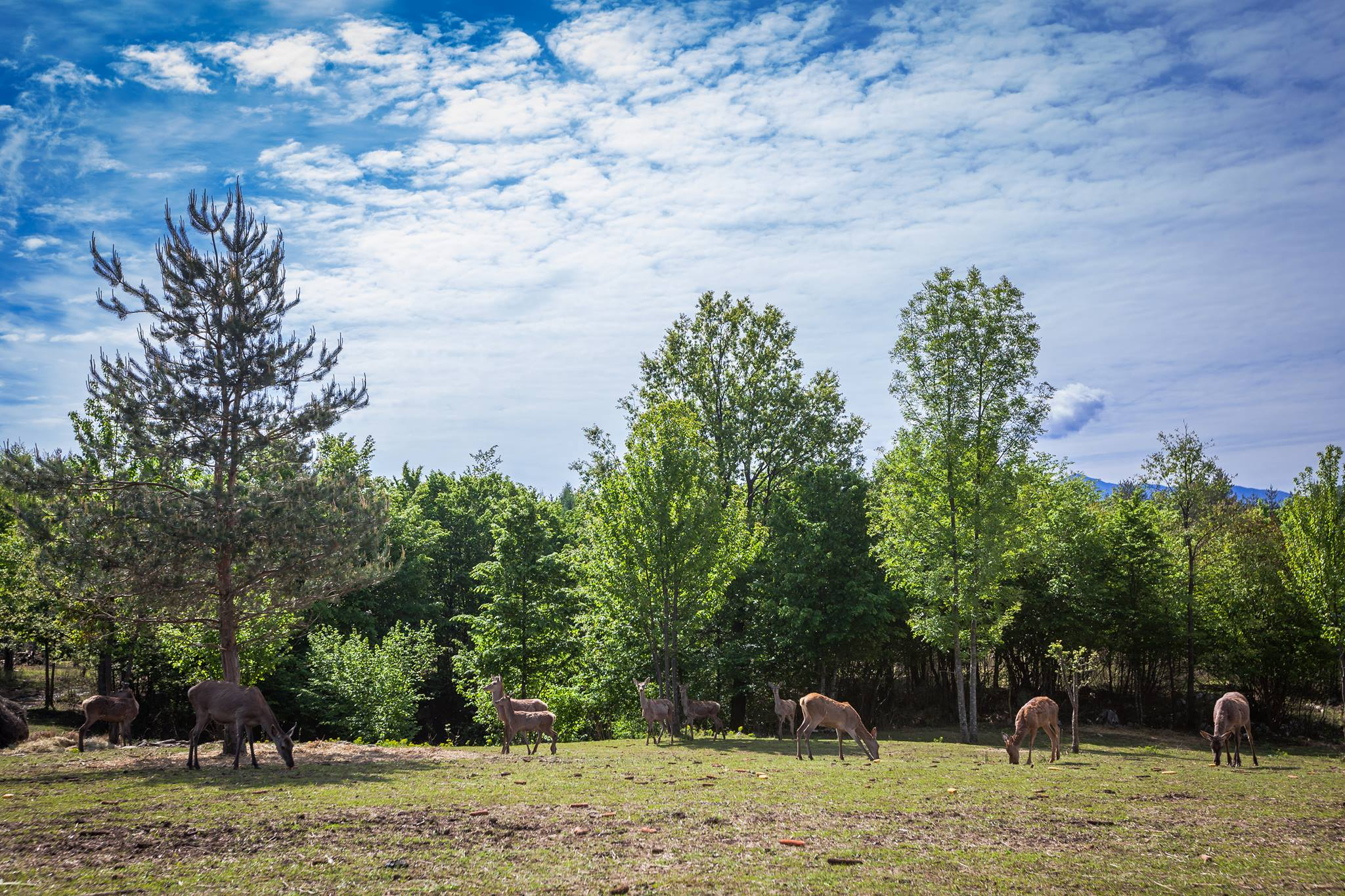 Photo of UPOZNAJTE JELENE! U Drežnik gradu dan otvorenih vrata povodom otvorenja ranča