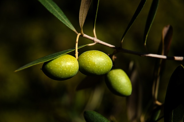 Photo of Čudotvoran učinak masline na naše zdravlje