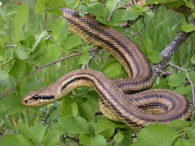 Photo of Što učiniti ako vas ugrize zmija?