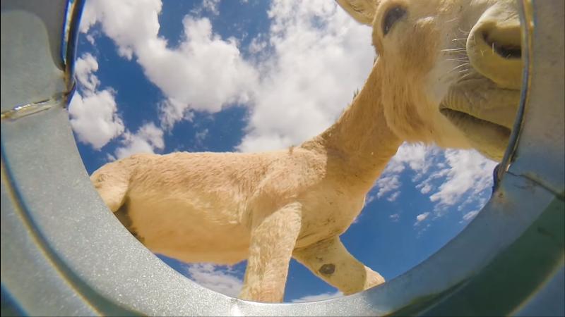 Photo of VIDEO Kamera u kanti s vodom:  Pogledajte tko je sve došao piti vodu!