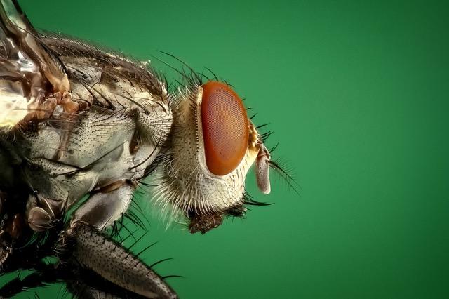 Photo of Jednostavan trik koji će spriječiti muhe da ulaze u vaš dom