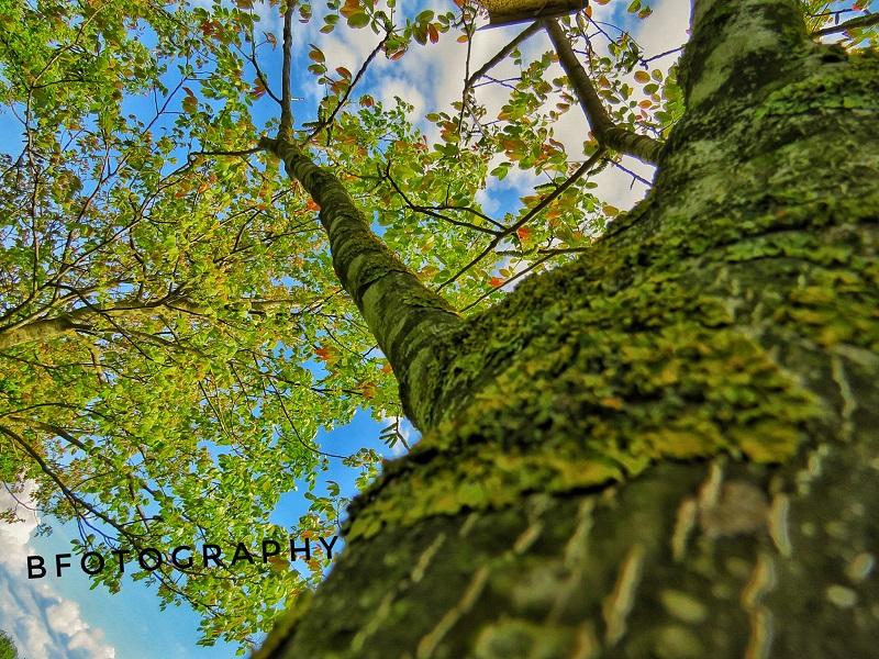 """Photo of Obilježava se Svjetski dan zaštite okoliša pod temom """"Povežimo ljude s prirodom"""""""