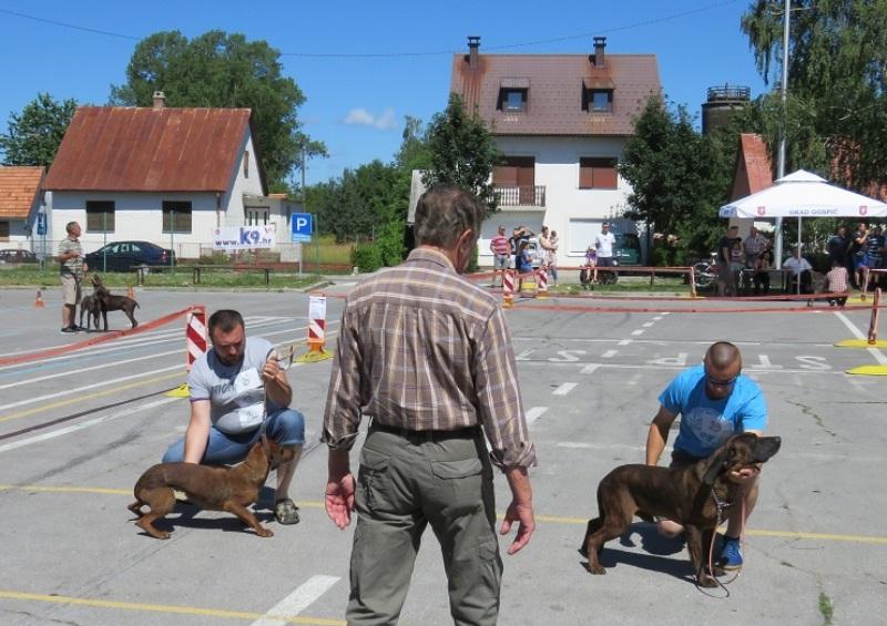 Photo of U Gospiću održana nacionalna izložba pasa goniča i ptičara