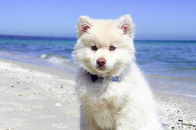 Photo of Najljepše plaže za pse u Hrvatskoj