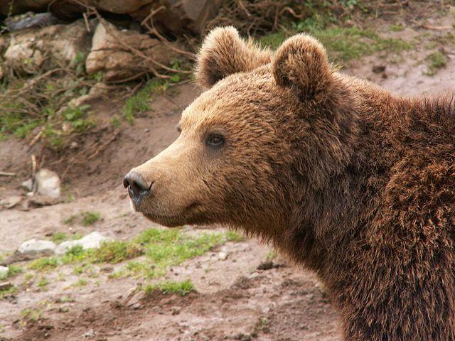 Photo of Prijatelji životinja pokrenuli peticiju za oslobađanje medvjeda iz Macole