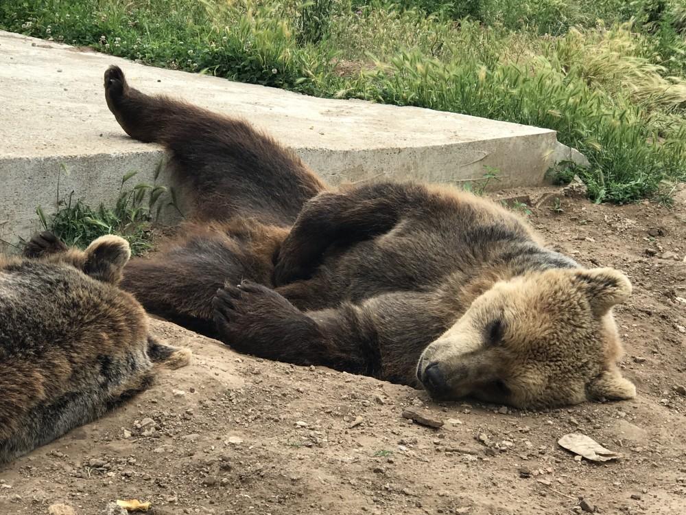 """Photo of FOTO """"Macolini medvjedi se ne uzbuđuju oko peticije i Prijatelja životinja"""""""