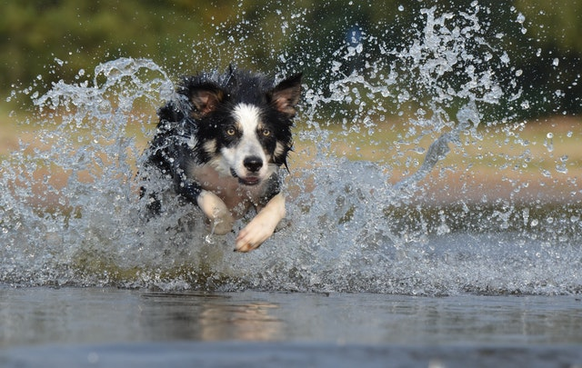"""Photo of """"Pasje vrućine"""": Kakve veze imaju psi s visokim ljetnim temperaturama?"""