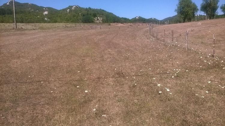 Photo of Suša uništila lička polja