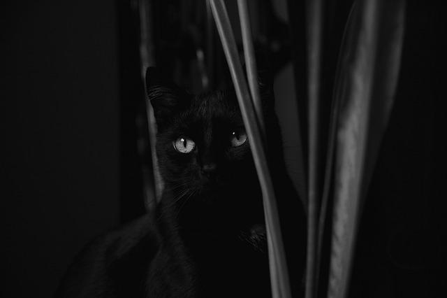 Photo of Ako vam ne presječe put, crna mačka donosi sreću