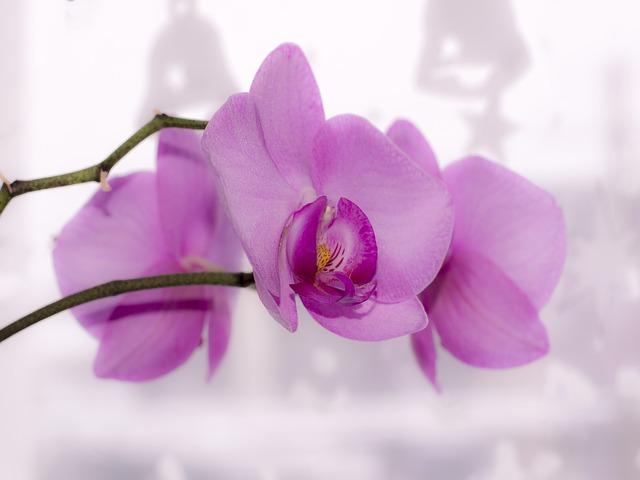 Photo of Trik koji će zauvijek promijeniti izgled vaših orhideja